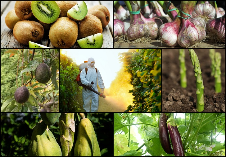 12 Frutas y verduras con la mayoría de los plaguicidas (15 y con el menor)