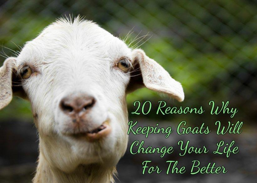 20 razones por las cabras Mantener cambiará su vida para mejor